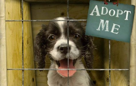 Shelters Encourage Fostering, Adoption of Pets during COVID19