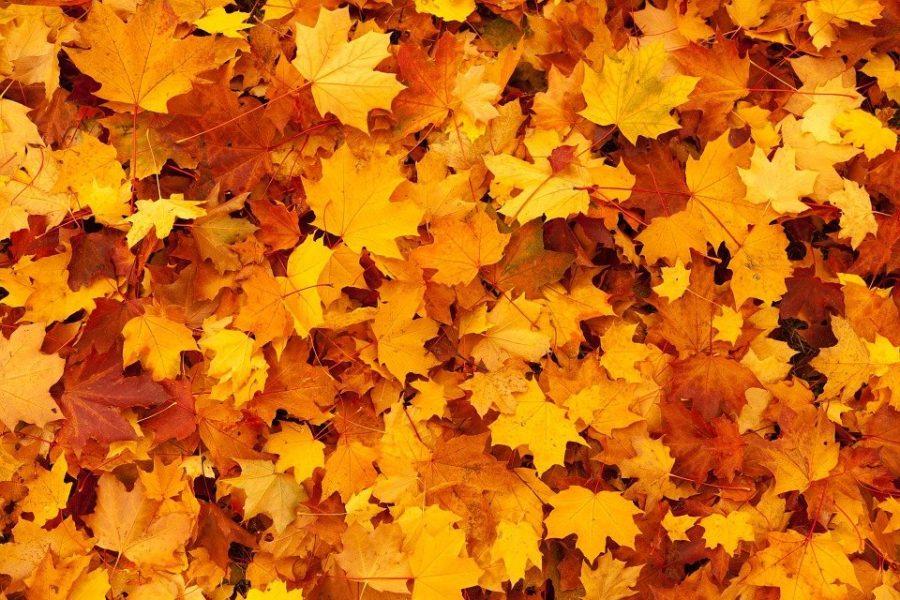 Griffith%E2%80%99s+Fall+Craft+Festival+Kicks+Off+The+Autumn+Season